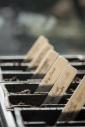 sorrells photography seedlings