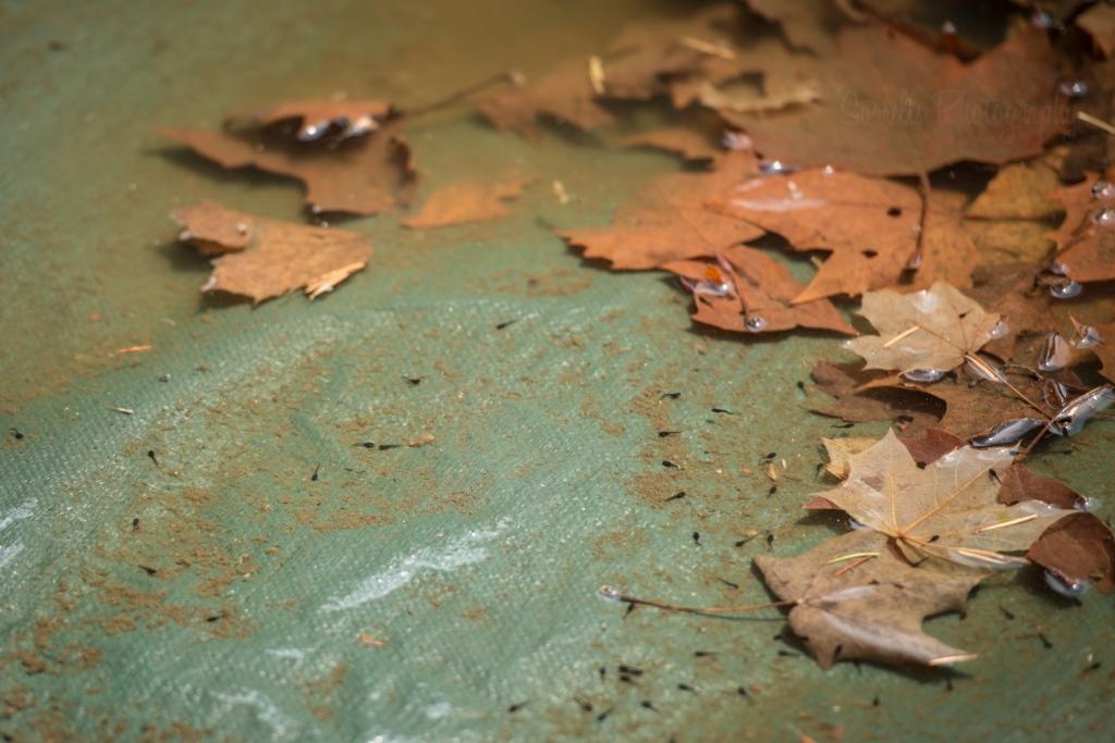 tadpoles-sorrells-photography.jpg