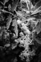 garden bw sorrells photography